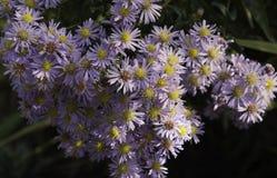 Жизнь растений 129 Стоковое Изображение