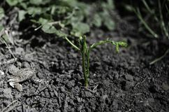 Жизнь растет в сердце земли стоковое изображение