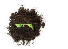 жизнь роста принципиальной схемы новая Стоковое Изображение