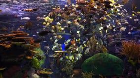 Жизнь рыб сток-видео