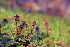 жизнь сада все еще Стоковая Фотография