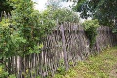 жизнь сельская Загородка переплетаннсяых штаног и ветвей Стоковая Фотография