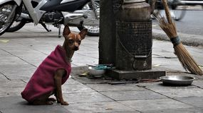 Жизнь собаки в Ha Noi стоковые изображения rf