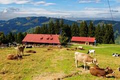 Жизнь страны на баварской горной вершине стоковая фотография rf