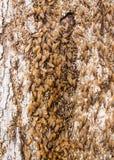 Жизнь термитов Стоковое фото RF