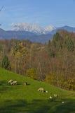 Жизнь фермы под горами Стоковое Изображение