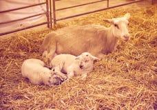 Жизнь фермы Стоковое фото RF