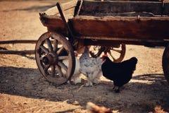 Жизнь фермы Стоковое Изображение RF