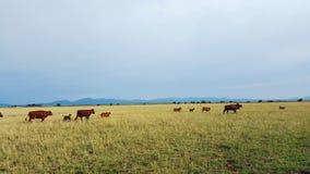 Жизнь фермы Стоковые Изображения