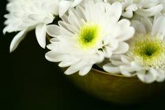 жизнь хризантемы все еще Стоковая Фотография