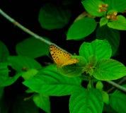 Жизнь цвета Стоковые Фотографии RF