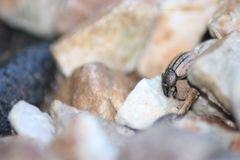 Жизнь черепашок Стоковая Фотография
