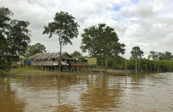 жизнь джунглей Амазонкы Стоковые Изображения RF
