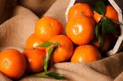жизнь clementine все еще Стоковые Фотографии RF