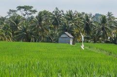Жизнь Famer в Ubud Бали Индонезии стоковое изображение rf