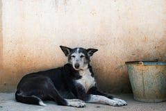 жизнь s собаки Стоковые Фото