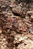 Жилища скалы национального монумента Tonto, обслуживание национального парка, u S Министерство внутренних ресурсов Стоковая Фотография RF