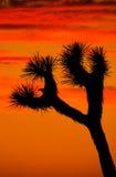 жильцы пустыни Стоковое Фото