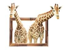 2 жирафа в бамбуковой рамке с влиянием 3d Стоковые Фотографии RF