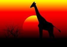 Жираф в Африке Стоковое Фото