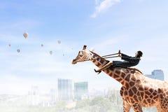 Жираф езды женщины Мультимедиа Стоковые Изображения