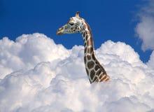 Жираф над облаками Стоковая Фотография