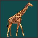 Жираф полигональный Стоковое фото RF
