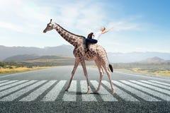 Жираф седловины девушки Мультимедиа Стоковое Изображение