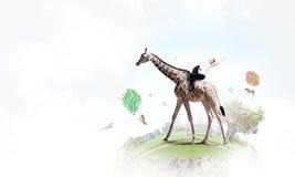 Жираф седловины девушки Стоковое Фото