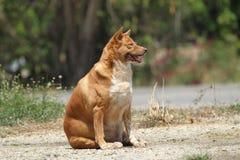 Жирная счастливая собака стоковое фото