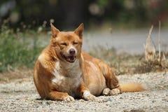 Жирная счастливая собака стоковая фотография