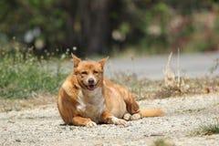 Жирная счастливая собака стоковые фото