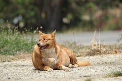Жирная счастливая собака стоковое фото rf
