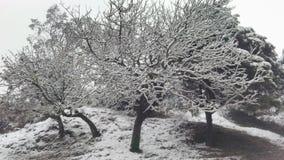 Жить в черной & белом стоковая фотография