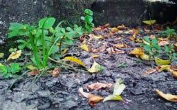 Жить под вашими ногами Природа, завод и упаденные листья на треснутой сухой почве стоковое фото rf