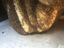 Жить с держать пчелы и положениями пчелы стоковая фотография rf