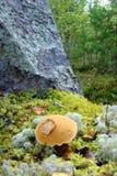 Жилец леса стоит около скалы Стоковые Фото