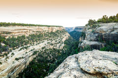 Жилища скалы в национальных парках мезы Verde, CO, США Стоковое Изображение RF