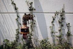 Жидкостный огнетушитель в стене Стоковые Изображения