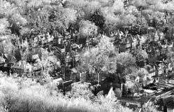 Жилой район общины устроенный удобно среди деревьев зимы, Стоковое Изображение RF