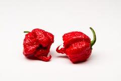 Жнец Каролины - горячие перцы Стоковая Фотография RF