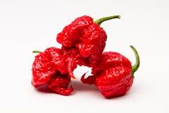 Жнец Каролины - горячие перцы Стоковые Фотографии RF