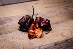 Жнец Primo шоколада - супер горячий перец Стоковые Фотографии RF