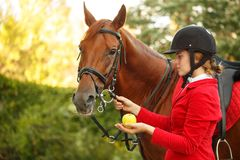Жокей для того чтобы подать лошадь с яблоком Стоковое Изображение RF