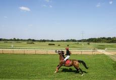 Жокей девушки на лошади вытягивает вожжи Стоковые Фотографии RF