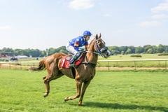 Жокей девушки на лошади красного света Стоковые Фотографии RF