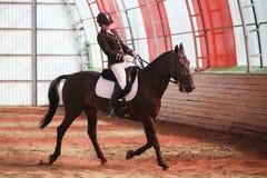 Жокей едет лошадь в арене Стоковая Фотография