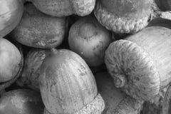 Жолуди в черно-белом Стоковое фото RF