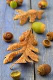 Жолуди и листья дуба Garry Стоковое Изображение RF