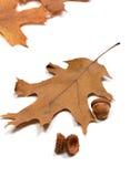 Жолуди осени и высушенные листья дуба Стоковые Изображения RF